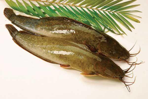Yellow-Catfish-1kg