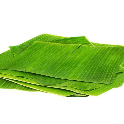 Banana Leaf 500x500 1