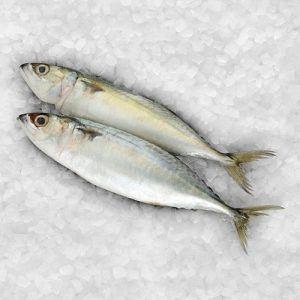 asian-choice-indian-mackerel-size-8-12-1kg
