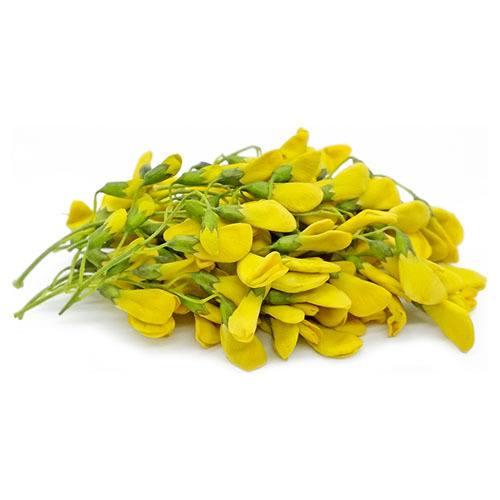 sesbania-flower