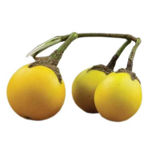 yellowsmallaubergine